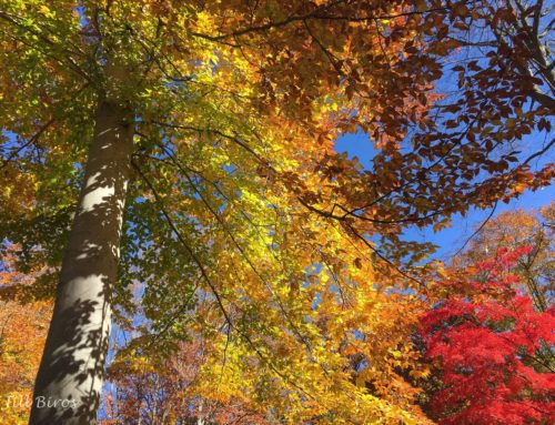 Photo of the Week:  Fall Color in Bucks County