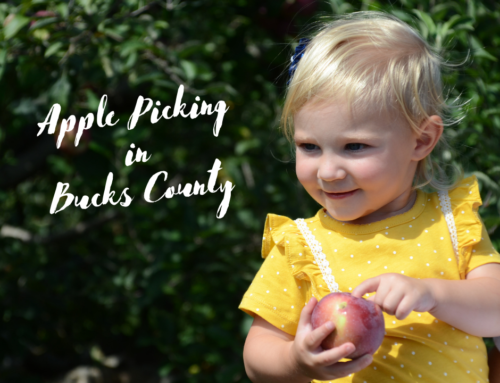 Apple Picking in Bucks County
