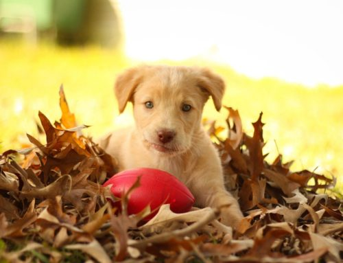 Fun Ways to Spend Time with a Furry Friend This Fall